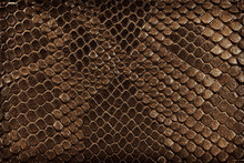 Brown Snake Skin, As Background. Reptile.