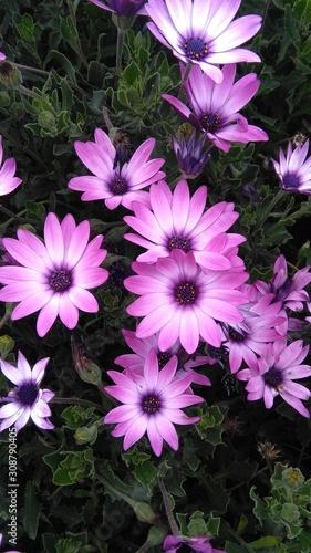 Fototapeta flowers in the garden obraz na płótnie