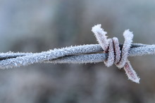 Closeup Of Hoary Frost Coverin...