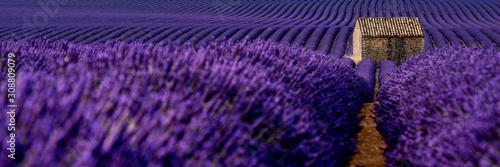 Lavender 46 - 308809079