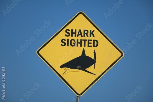 Shark sighted at the Beach in Sydney, Australia Canvas Print