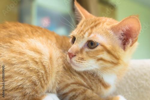 Obraz 可愛い 子猫 - fototapety do salonu