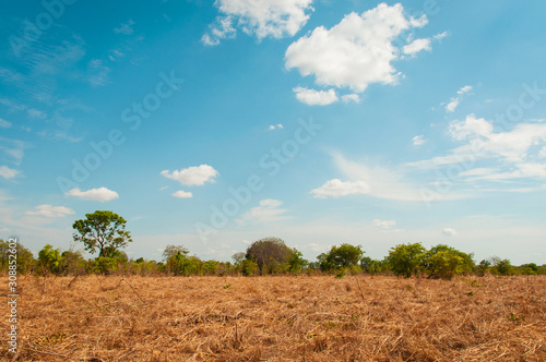 Photo dry pasture in the Brazilian cerrado