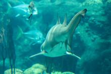 Shark Swimming Away
