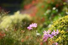 ชื่อ Colorful Flower Bed In A Park