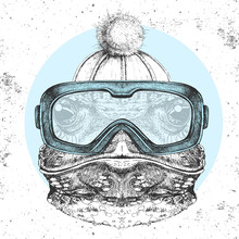 Hipster Animal Frog In Winter Hat And Snowboard Goggles. Hand Drawing Muzzle Of Frog