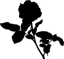 Black Silhouette Of Rose Bush ...