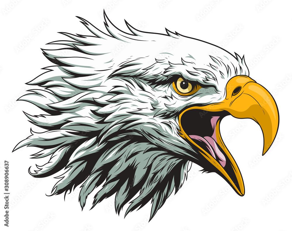 Fototapeta Bald eagle head