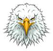 Bald eagle head front