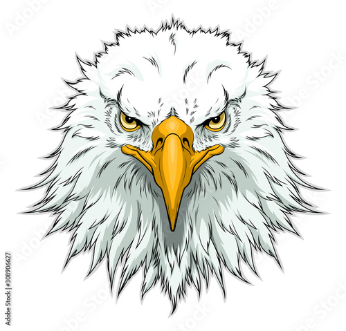 Bald eagle head front Fototapet