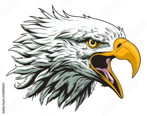 Fototapeta Bald eagle head