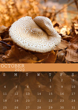 October 2020 Calendar With A Mushroom Background Surrounded By Orange Leaves. In Size A3