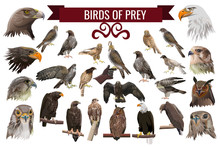 Set Of Birds Of Prey, Vector Illustrations
