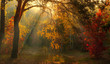 Forest. Autumn. A pleasant walk through the forest, dressed in an autumn outfit. The sun plays on the branches of trees and penetrates the entire forest with rays. Light fog makes the picture a little