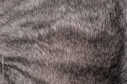 Leinwand Poster red stripped cat natural fur texture backgroung for wallpaper