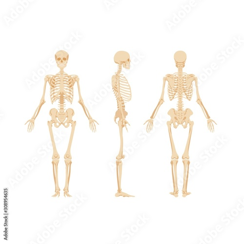 Set of skeletons isolated on white background Canvas Print