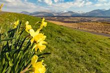 Frühling Am Ben Nevis, Schott...