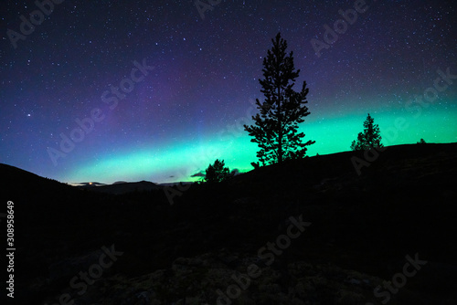 Photo  Northern lights/aurora borealis and starry sky from outdoors in the middle of the forest