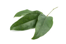 Fresh Bamboo Grass Or Bai Ya Nang Leaves (Tiliacora Triandra (Colebr.) Diels) Isolated On White Background. Concept Herbal And Vegetable Extracts Are Medications For Treating Diabetes And Heart Diseas