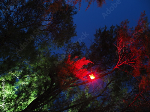 decorative red light attached on tree at night Wallpaper Mural