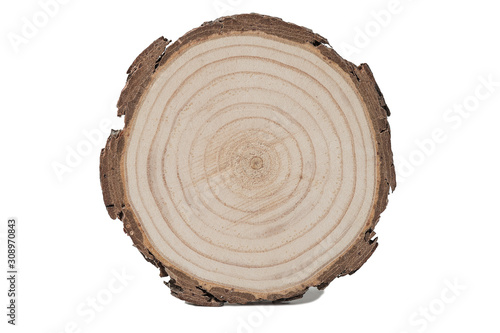 Ash tree cut on whte background. Isolated