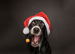 Black dog wearing a santa hat catching a treat.