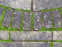 Moss Growing Between Blocks An...