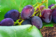 Ripe sweet grapes on a wooden background, close-up. ripe purple black table grapes.