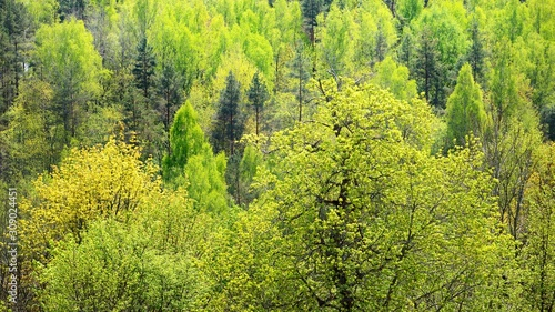 Photo areal view on Gauja river valley in spring in Sigulda, Latvia