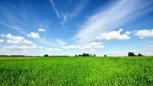 Classic Rural Landscape. Green...