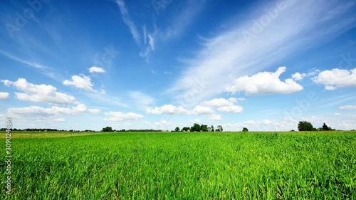 plakat classic rural landscape. Green field against blue sky