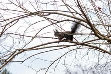 Eichhörnchen Sucht Nach Essen