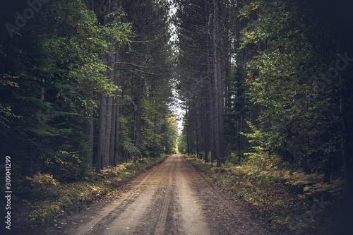 Vintage Fall Forest Road - fototapety na wymiar