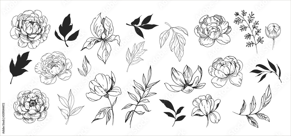 Fototapeta Floral set. Sketches of flowers, plants, leaves. Hand drawn illustration converted to vector. Outline with transparent background