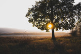 Fototapeta Na ścianę - Amazing picture, big tree among the autumn meadow with colorful forest and sunset on the background