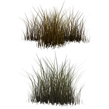 Patches Of Dry Grass Isolates ...