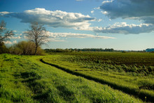 Fallow Agricultural Field Crop With Weeds Growing