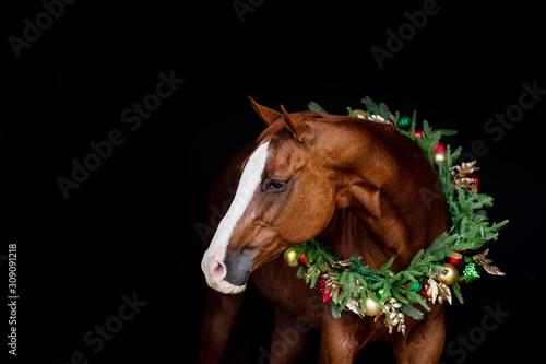 Fotografía  Christmas Horse
