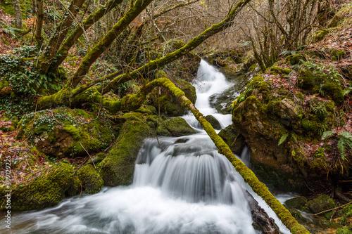 Riachuelo con pequeña cascada, troncos, rocas y suelo cubierto de musgo y hojas secas Wallpaper Mural