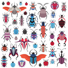 Unusual Bugs And Weird Beetle Species Icons