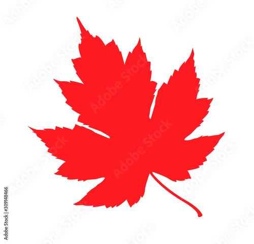 Foto  canada leaf