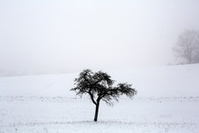 A Solitary Tree In Winter On A...