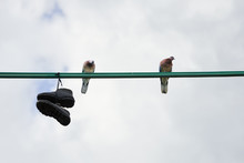 Shoes Hang And Two Pigeons Sit...