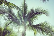 Coconut Palm Tree With Sky Bac...