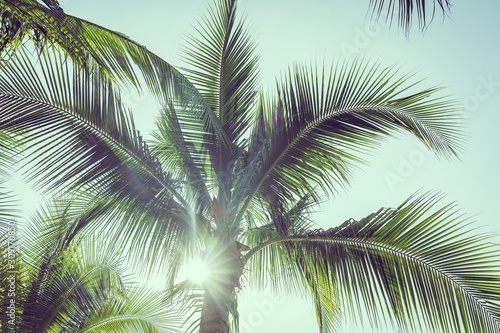 Coconut palm tree with sky background
