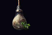 Concept Of Environmental Conservation And Green Energy Power With Plant Growing Inside Light Bulb
