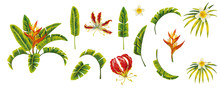 Isolated Tropical Leaves Flowe...