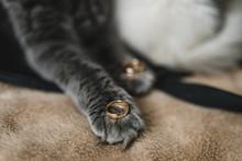 Wedding Ring In Cat's Paws. Cu...