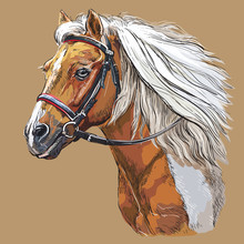 Hand Drawing Horse Portrait Ve...