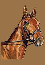Hand Drawing Horse Portrait Ve...
